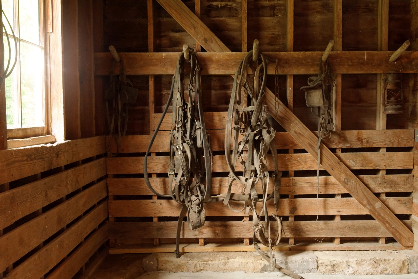 Leather harnesses in the white barn